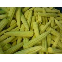 Buy cheap IQF Vegetables IQF baby corn whole from wholesalers