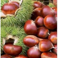 China Dried and frozen products Fresh chestnuts on sale