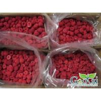Buy cheap IQF Fruits raspberry from wholesalers