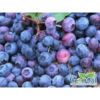 Buy cheap IQF Fruits blueberry from wholesalers