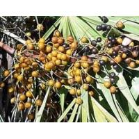 Hot Products Saw Palmetto Berry Extract