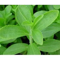 Wholesale Standardized Extract Stevia Leaf Extract from china suppliers