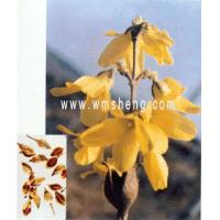 Buy cheap Disintoxicating, antipyretic NAME:Fructus Forsythiae from wholesalers