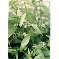 Buy cheap Disintoxicating, antipyretic NAME:Herba Andrographitis from wholesalers