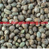 Wholesale Hemp seeds from china suppliers