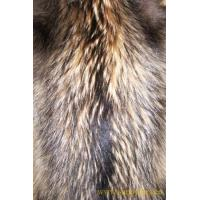 Wholesale Raccoon Skins from china suppliers