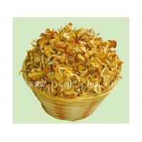 Buy cheap Chantarelle from wholesalers
