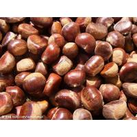 China Chinese chestnut on sale