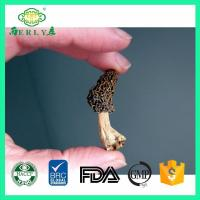 China dried morel mushrooms for sale from Yunan Morchella esculenta on sale