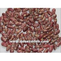 Wholesale Dried Products Light speckled Beans from china suppliers