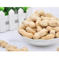 Wholesale Dried Products Peanuts from china suppliers