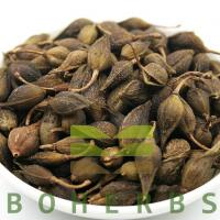 Wholesale Forsythiae Fructus Weeping Forsythiae Capsule Forsythia Fruits Lian Qiao from china suppliers