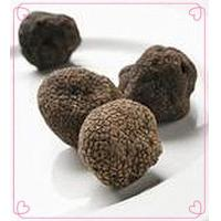 Wholesale Truffle Fresh Truffle from china suppliers
