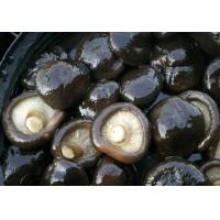Wholesale Shiitake from china suppliers