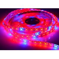 LED Plant Grow Lights 5050 LED Strip DC12V Red Blue 5:1 for Greenhouse Hydroponic Plant Growing for sale