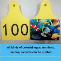 Wholesale BLUEWORTH new type ear tags can print colorful numbers letters and logos from china suppliers
