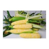 Buy cheap Browse By Category Nirvana CAPBF10-411 from wholesalers