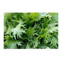 Buy cheap Browse By Category Florida Broadleaf from wholesalers