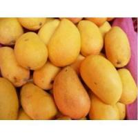 Wholesale mango powder from china suppliers