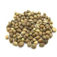 Wholesale Hemp Seed from china suppliers