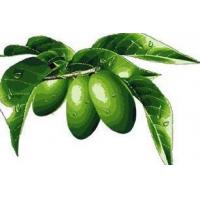 Wholesale Olive Leaf Extract from china suppliers