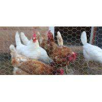 Wholesale Chicken Wire - Flexible and Durable for Protecting Poultry from china suppliers