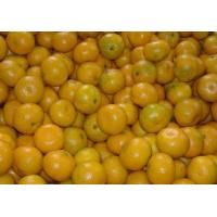 Wholesale Fruits Chinese mandarin orange from china suppliers