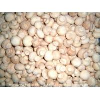 Wholesale IQF Frozen Mushrooms IQF white button mushroom from china suppliers