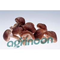 China Fresh Shiitake Mushroom on sale