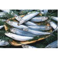 Buy cheap Fresh foods Canned Sardine from wholesalers