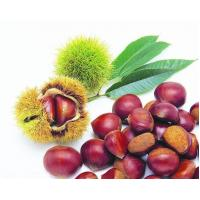 Wholesale Fresh foods IQF Chestnuts from china suppliers