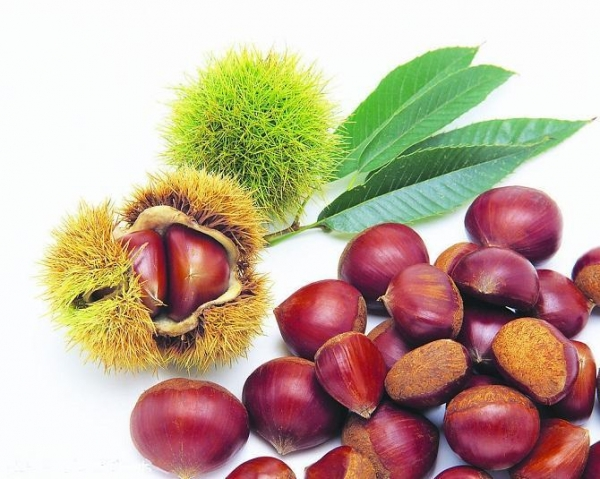 Quality Fresh foods IQF Chestnuts for sale