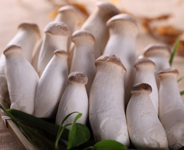 Quality Fresh foods IQF King Oyster Mushroom for sale
