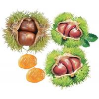 China Chestnut And Kernels on sale
