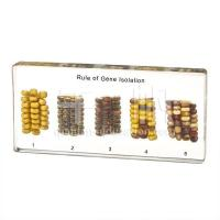 Wholesale Plant Comparison 2501 Rule of Gene Isolation from china suppliers