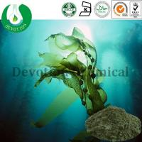 Wholesale Kelp Extract from china suppliers