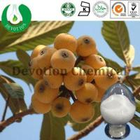 Wholesale Loquat Extract- Ursolic Acid from china suppliers