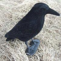 Buy cheap Hunting Decoys Black Crow Decoy Hunting Decoy from wholesalers