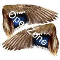 Wholesale Mallard Decoy Wings[LDW-170] from china suppliers