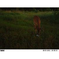Buy cheap Bushnell Trophy Cam HD (Camo) from wholesalers