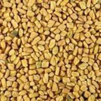 Wholesale Fenugreek Seeds (Trigonella Foenum Graecum) Fenugreek Seeds (Trigonella Foenum Graecum) from china suppliers