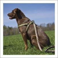 Buy cheap Lupine Dog Harness - 1