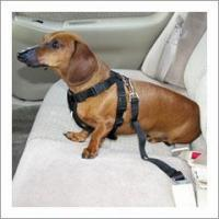 Buy cheap Pet Seat Belt Harness from wholesalers