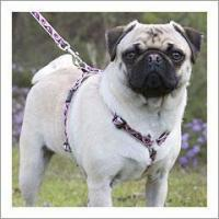 Buy cheap Lupine Dog Harness - 1/2
