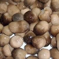Buy cheap Canned straw mushroom from wholesalers