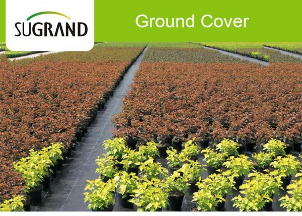 China 100GSM Plastic Black Landscape Weed Mat Ground Cover Fabric For Garden
