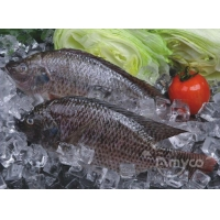 Wholesale Tilapia Gutted and Scaled from china suppliers