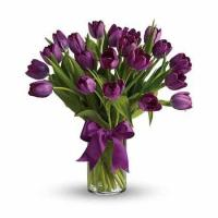 Wholesale Purple Tulips from china suppliers