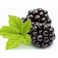 Buy cheap Blackberry Extract, Blackberry Fruit Powder, Black Raspberry from wholesalers