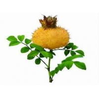 Buy cheap Rosa roxburghii Extract, Sweet Chestnut Rose Extract from wholesalers